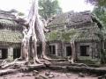 165 Ta Prohm Roots 3