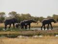 Etosha Elephants4