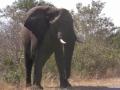 086 SAF Elephant 3