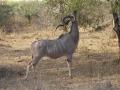 093 SAF Kudu