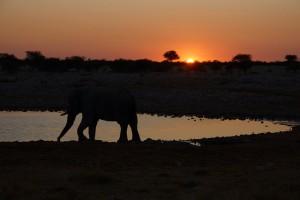 Etosha Waterhole night elephant