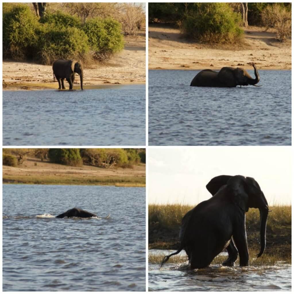 Chobe ElephantCrossing