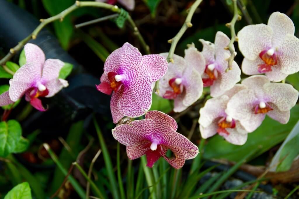 SIN GardenBay Flowers