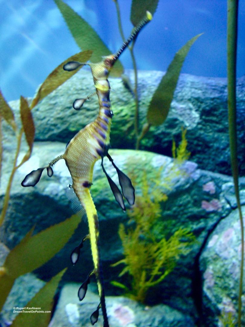 cal-monterey-aquarium4