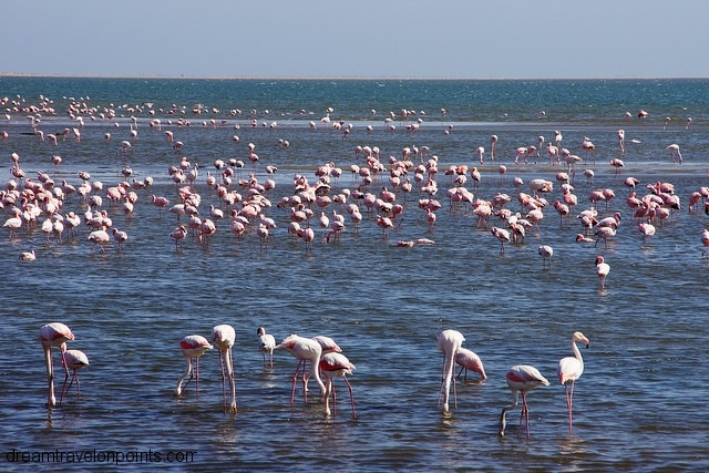 Flamingoes on the waterfront