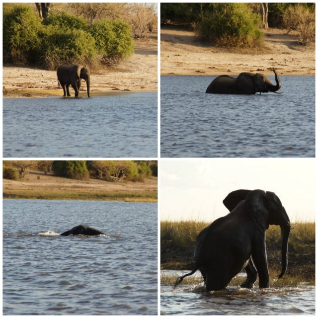 Chobe ElephantCrossing